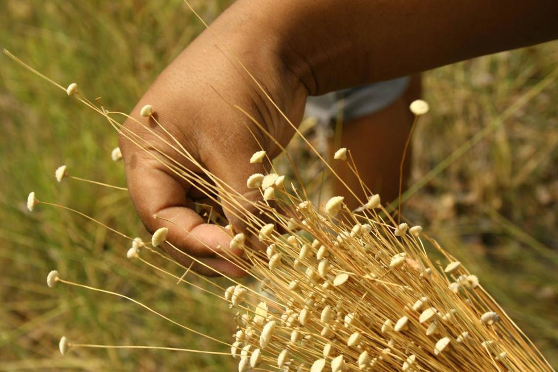 A lei visa fiscalizar e regulamentar a prática de colheita e manejo do capim e buriti