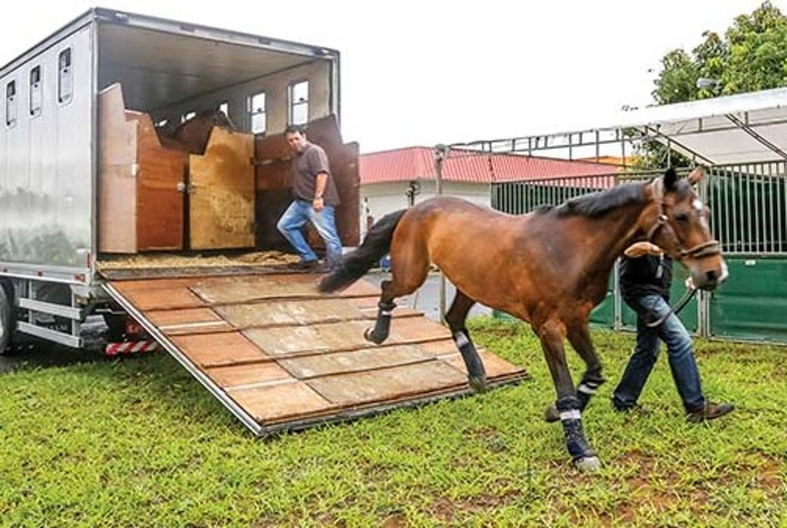 O Passaporte Equestre deve se tornar um documento padronizado e único para transporte de animais no